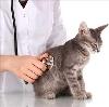 Ветеринарные клиники в Пласте